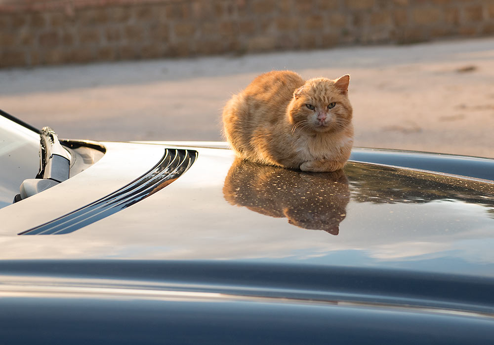 cat on car in Gibilmanna