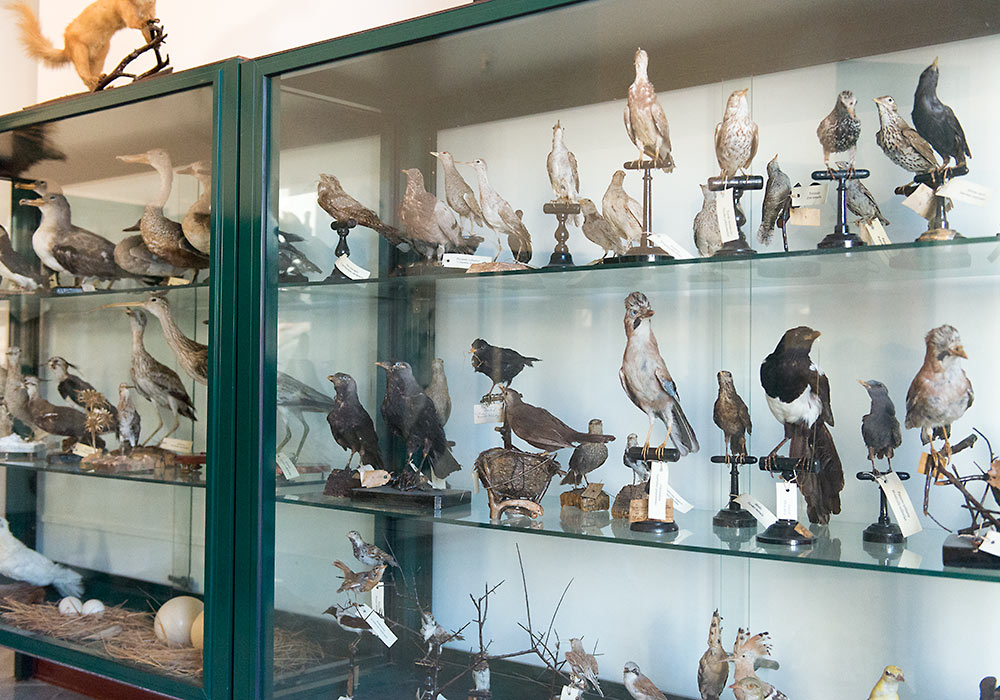 stuffed birds in Museo Mandralisca